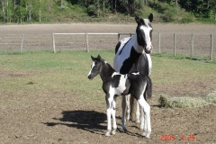 Dancer- Sired By Little Peppe Leo
